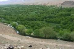 طراوت و زیبایی در منطقه شیخه؛ ولسوالی ارزگان خاص